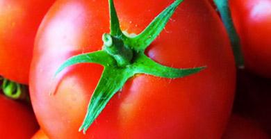Semillas de Hortalizas y Frutales