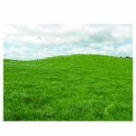 Rye Grass Perenne Samson Certified